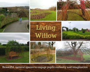 living-willow